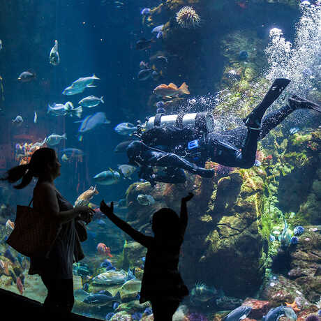 A mother and daughter in silhouette in front of the giant Philippine Coral Reef exhibit