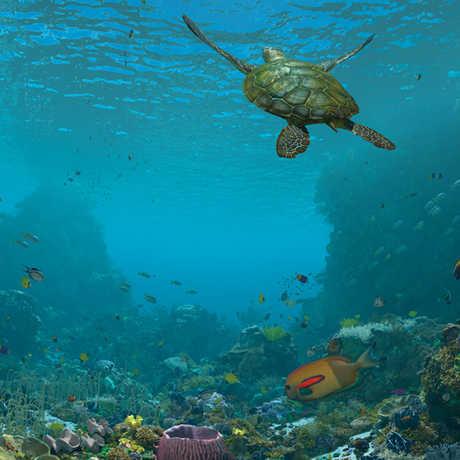 expedition reef morrison planetarium skin nightlife calacademy
