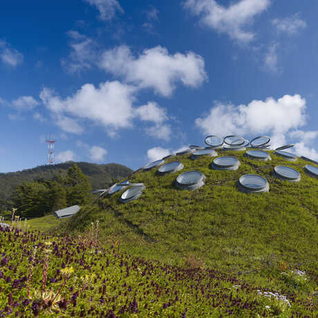 Rolling hills and skylights of the Academy's Living Roof