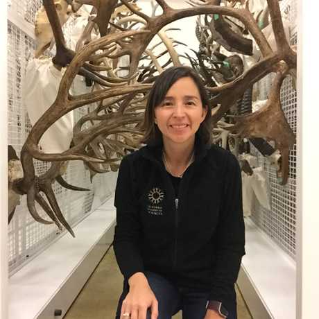Martha Velez, Ornithology and Mammalogy Curatorial Assistant