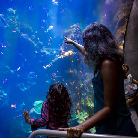 A woman and child in front of the Philippine Coral Reef tank