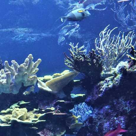 A view into the Phillipine Coral Reef tank at the Academy.