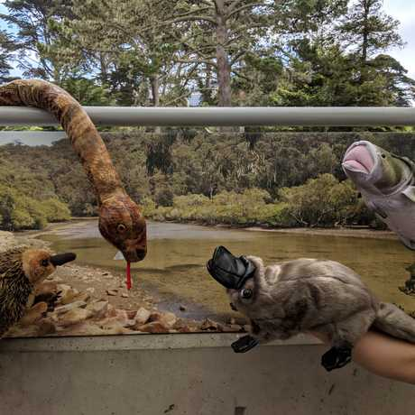 Animal Puppets in front of a stream background
