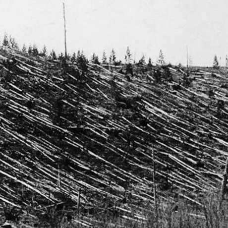 Flattened forest after Tunguska impact