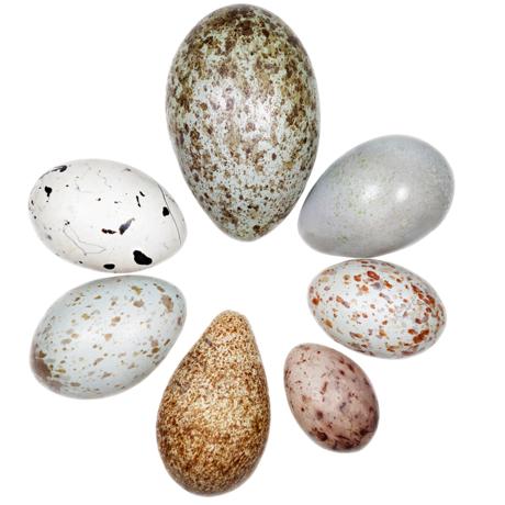egg grid