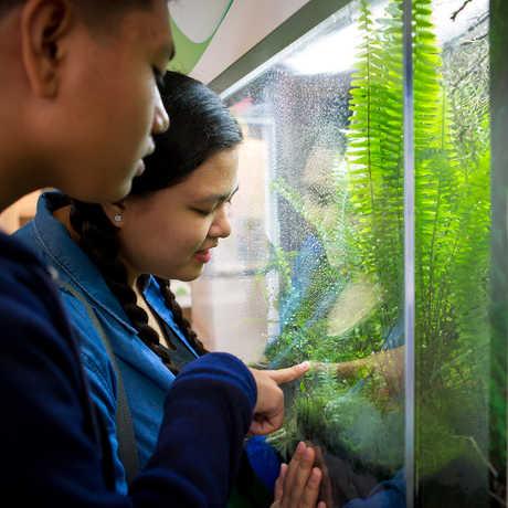 Members looking at the California newt