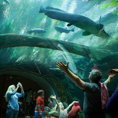 Awestruck guests in the Amazon Flooded Forest Tunnel