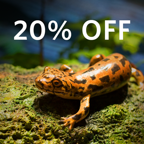 A spotted orange newt with a header announcing 20% off