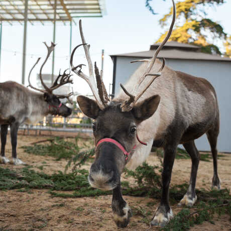 Two reindeer in the East Garden