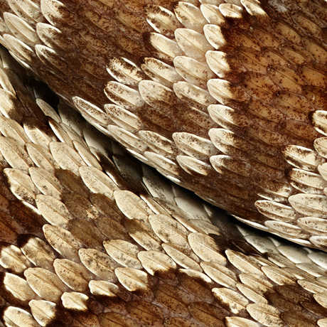 Macro photograph of brown and white rattlesnake skin