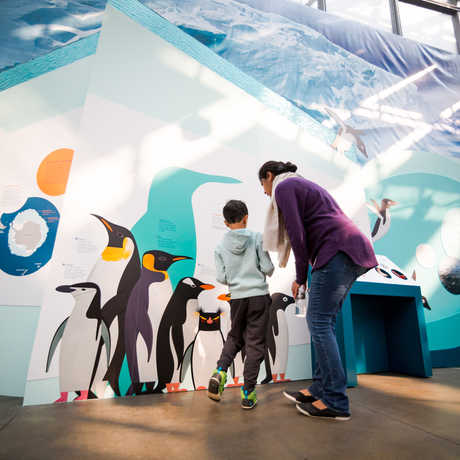 Mother and son explore the Tis the Season for Science exhibit