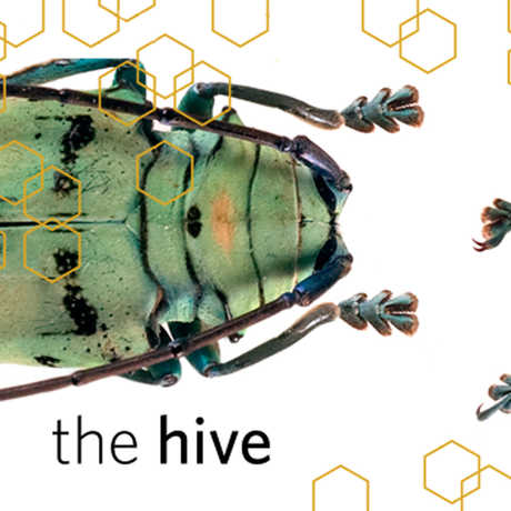 Hive Collections Tour