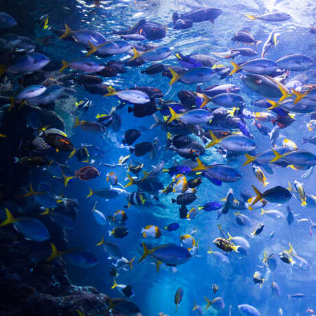 Colorful fish congregate in the Philippine Coral Reef tank