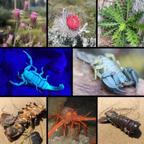 Photo collage of scorpions, thistles, and spiny lobsters
