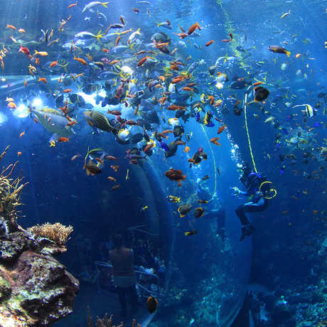 Philippine Coral Reef; Photo: Will Love