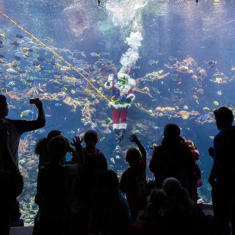 Scuba Santa diving in a coral reef tank with museum guests taking photos below him.