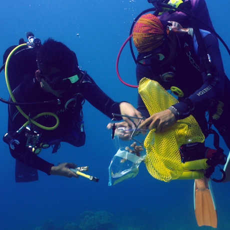 Collecting coral