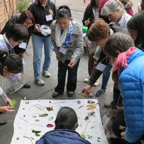 teachers huddle around leaves they collected outside