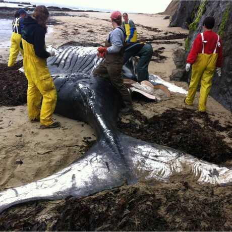 Whale Response