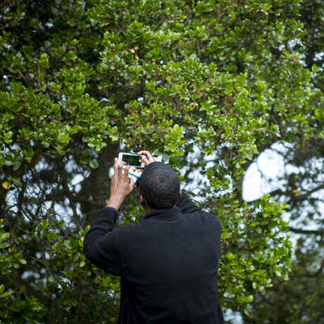 Man taking a photo of a tree with a cell phone
