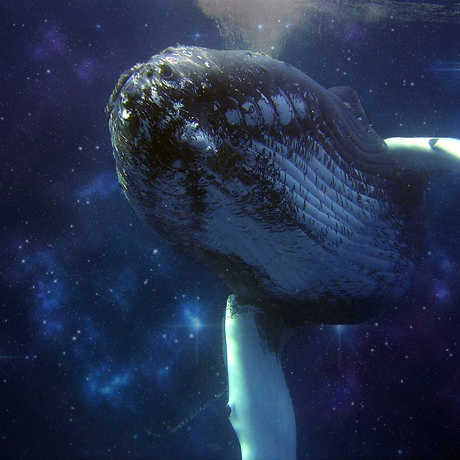 Artistic representation of a humpback whale against a backdrop of stars