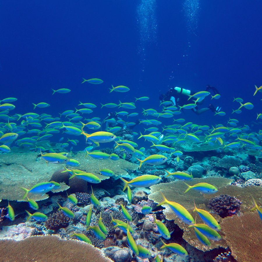 A reef in the Chagos archipelago, central Indian Ocean