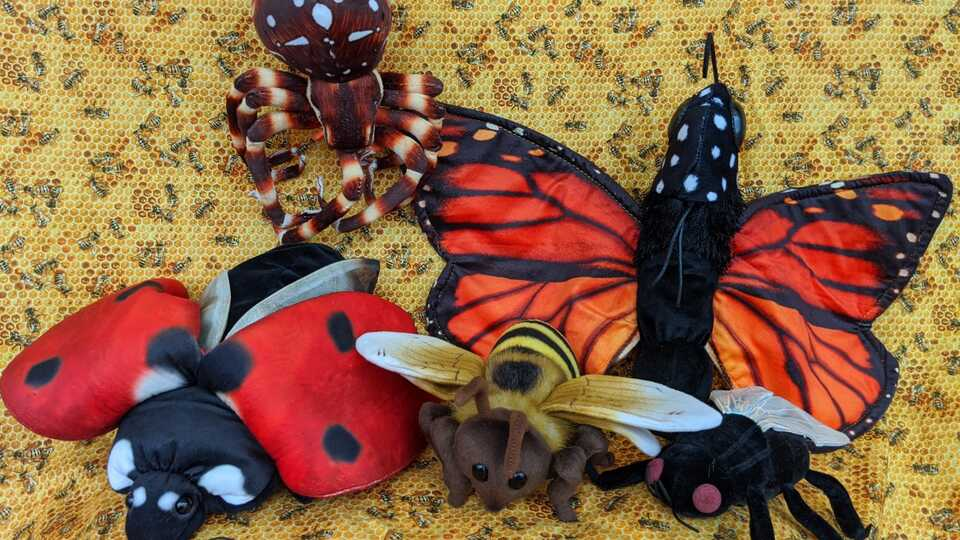 Image of butterfly, ladybug, spider, fly, and bee puppet