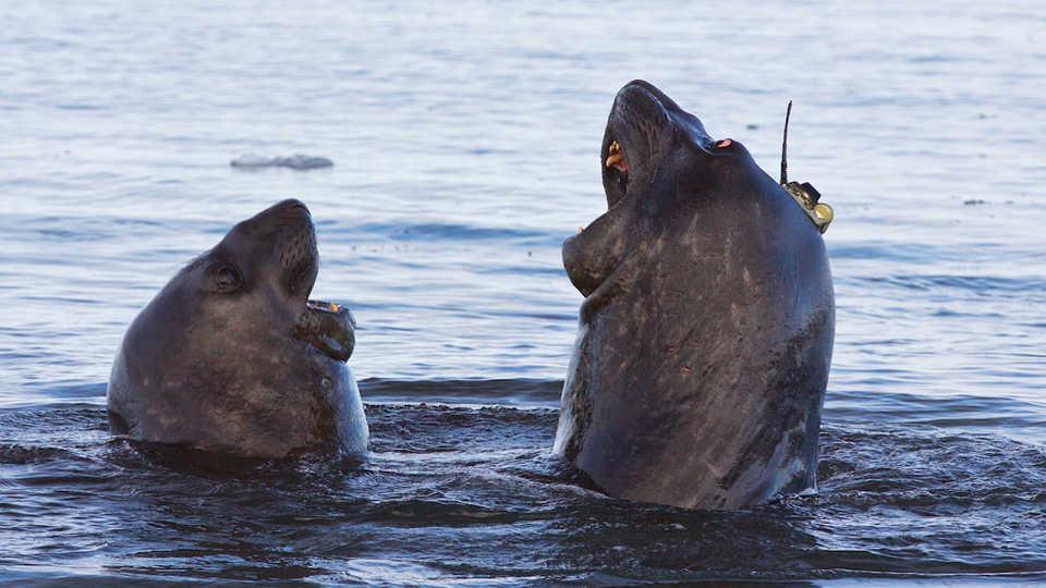 Seals or Scientists? Image by Clive R. McMahon