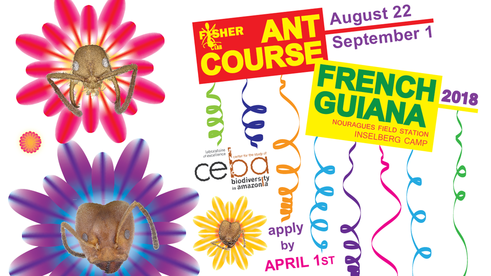 Ant_Course_2018