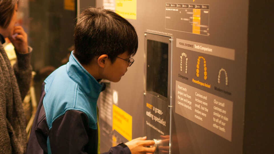 A boy glimpses into the Human Odyssey exhibit
