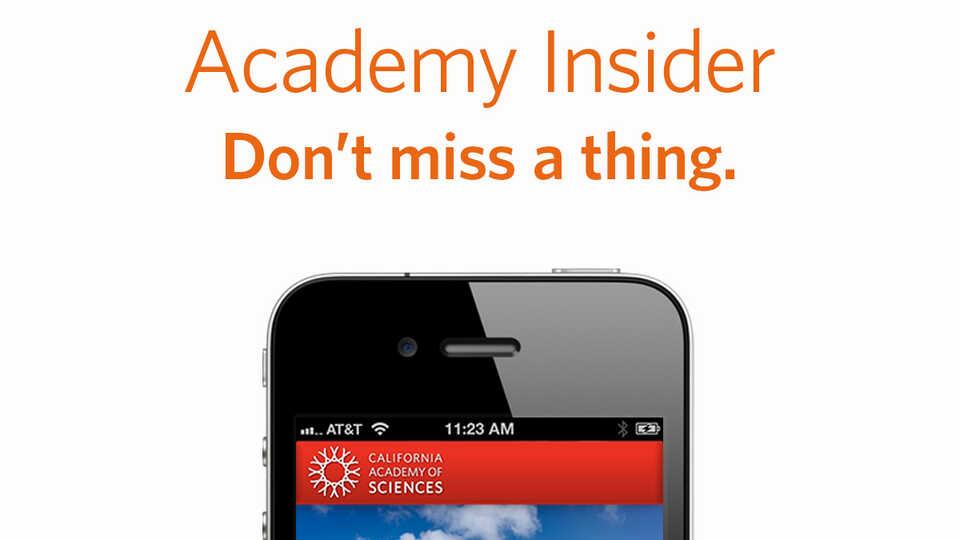 Academy Insider