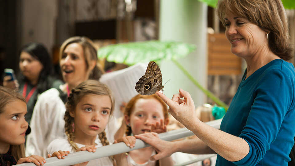 An educator shows a group of children a live butterfly in the Rainforests of the World exhibit.