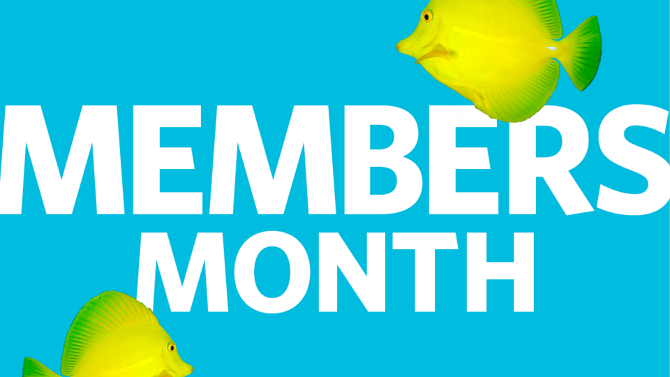 Members Month at the Academy