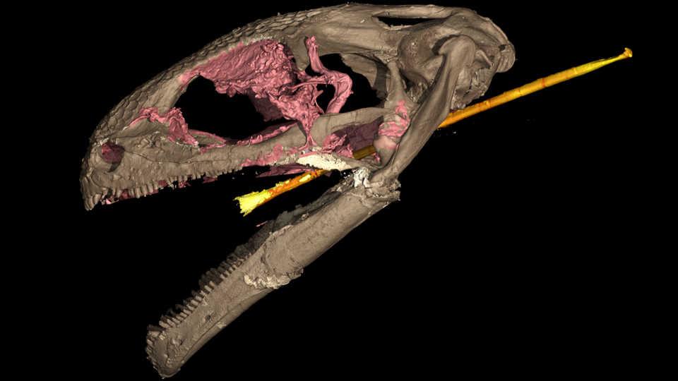 3D scan of Yaksha peretti skull