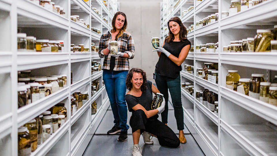 3 herpetologists at the Academy pose with specimens in the collections