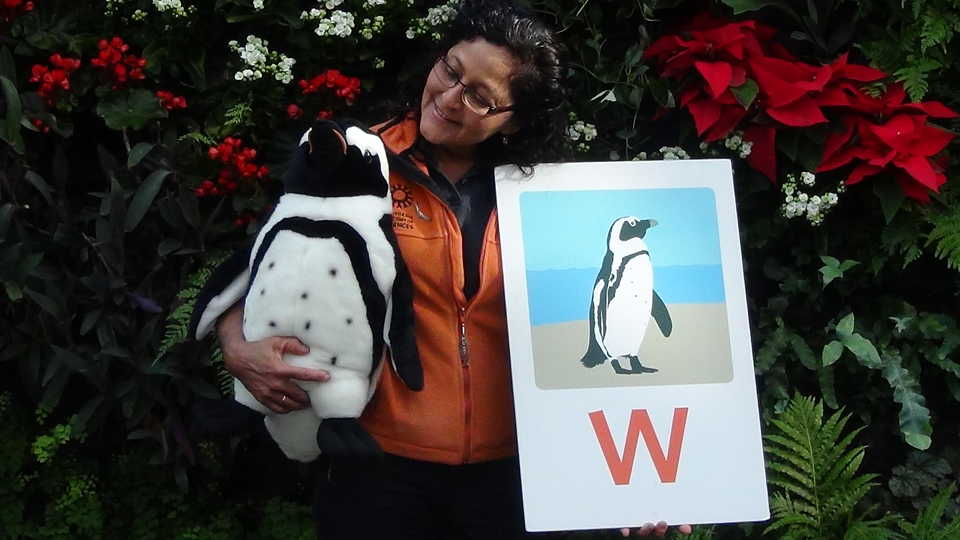 """A presenter holding props from """"P"""" is for Penguin"""