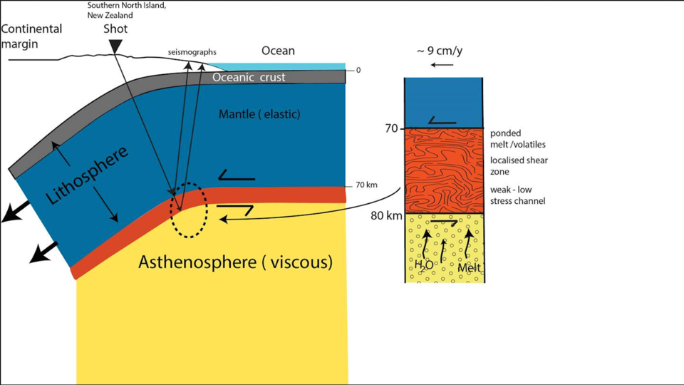 artoon showing the oceanic lithosphere of the Pacific plate subducting beneath the continental Australian plate.