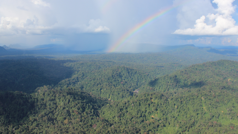 Remaining forests in Borneo