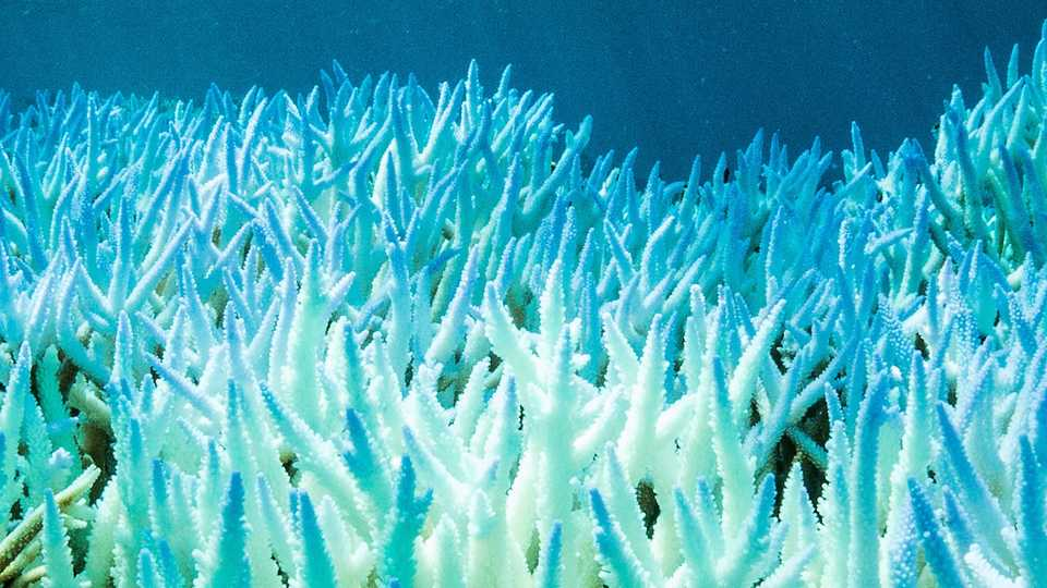 Monday Bites Coral Bleaching, Drought News, And Doomed -2026