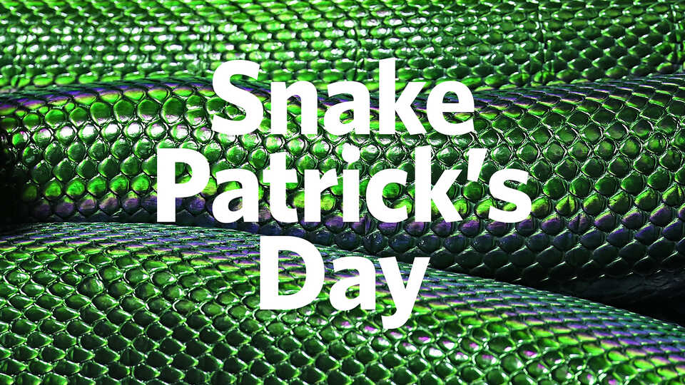 Snake Patrick's Day written on a background of green snake scales