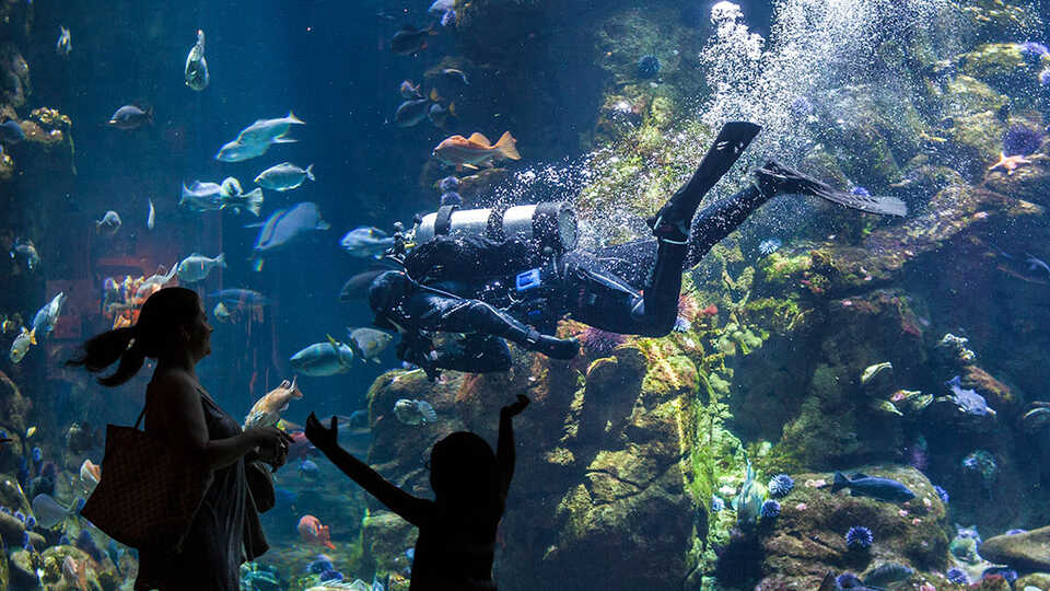 Guests silhouetted in front of the California Coast exhibit with scuba diver