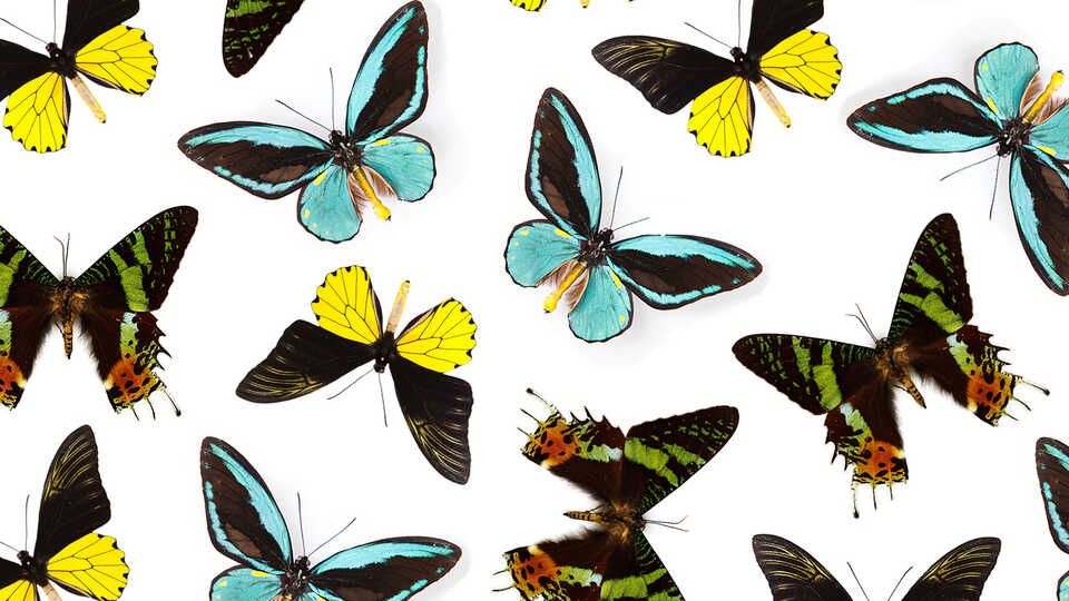 Collage of colorful tropical butterflies against white background