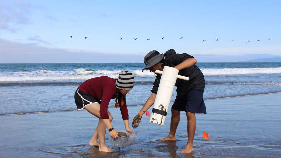 Careers in Science interns collect sand crabs on a beach for an experiment