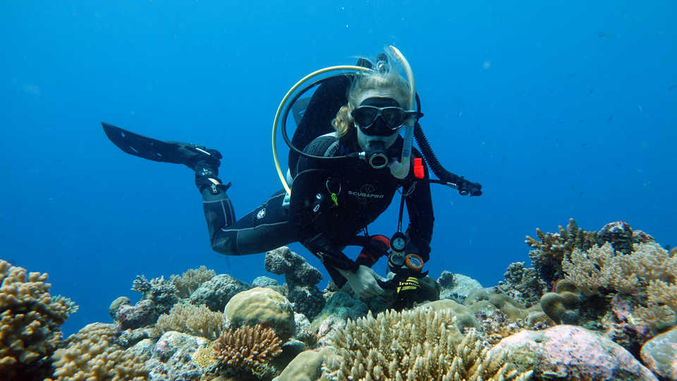 Dr. Rebecca Albright scuba diving in a coral reef