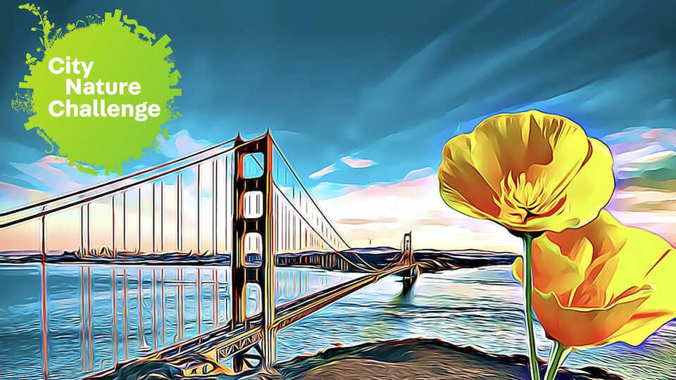San Francisco Bay Area City Nature Challenge, April 24-27, 2020