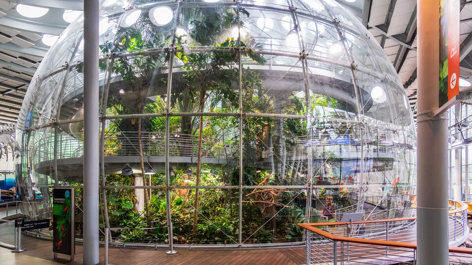 Wide-angle view of the indoor rainforest at the Academy