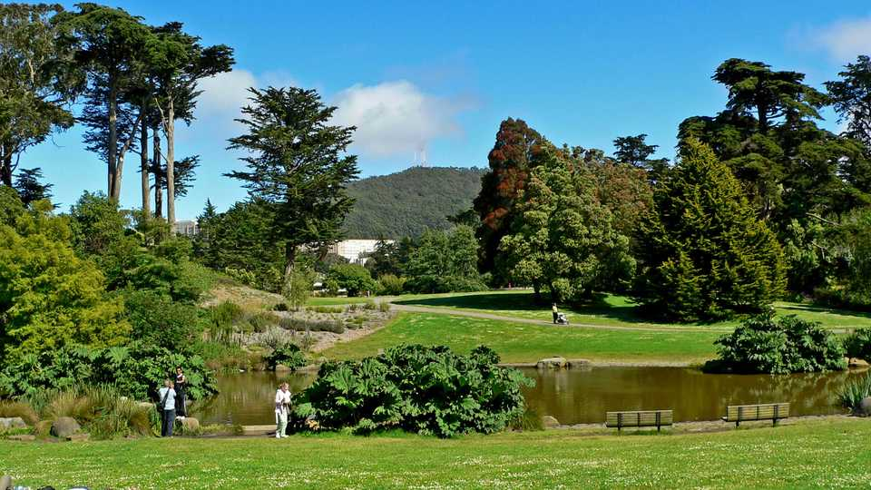 photo of trees and plants at the sf botanical garden