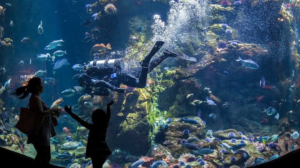 Diver in the California Coast exhibit at the Academy
