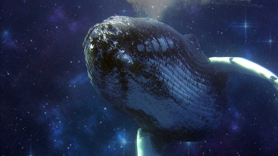 Can studying whale communications help us figure out how to talk to ET?